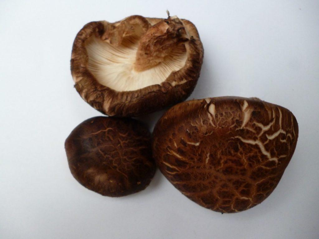 Shiitake mushrooms grown on oak